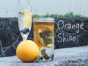 orangeshiso